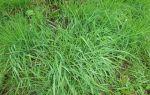 Как выбрать газонную траву для двора, дачи и посева на детской площадке