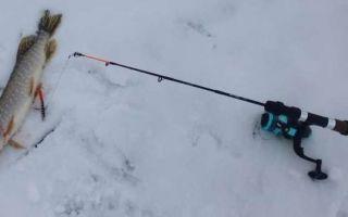 Удочка для зимней рыбалки на щуку, карпа, окуня: правила выбора
