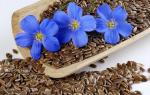 Льняное семя или масло что лучше, как выбрать для похудения, отзывы