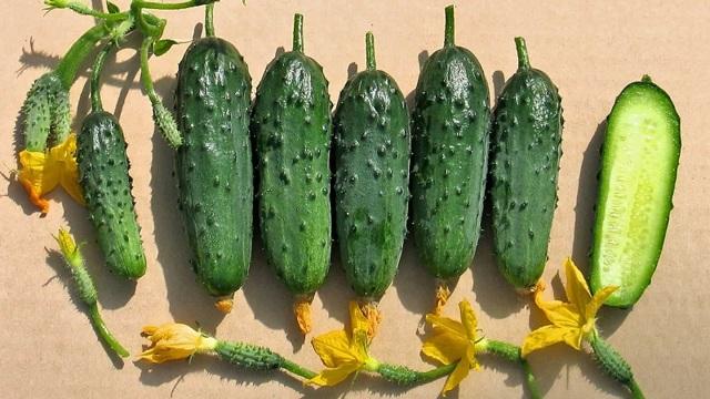 Огурцы для теплицы из поликарбоната: какие сорта лучше сажать в теплице в Подмосковье, лучшие семена огурцов для Урала и Сибири
