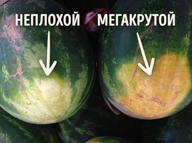 Как выбрать арбуз спелый, сладкий и без нитратов + видео