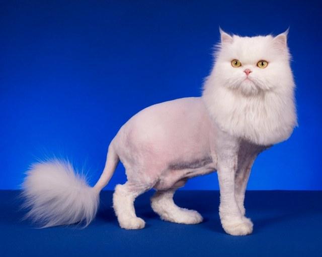 Машинки для стрижки кошек и собак в домашних условиях: как выбрать и какую купить + отзывы