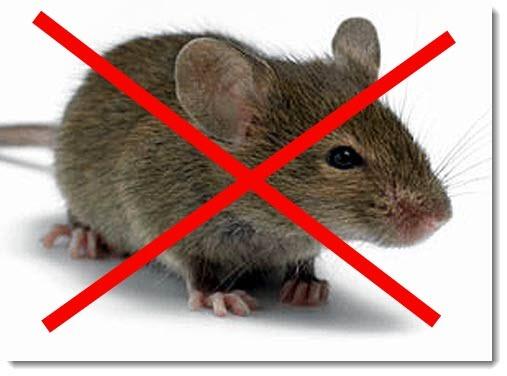 Отпугиватель крыс и мышей: какой лучше + отзывы