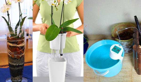 Какой горшок нужен для орхидеи и как его правильно выбрать