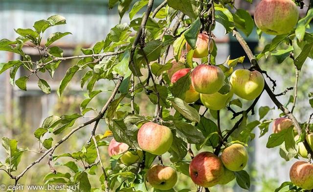Соковыжималки для овощей и фруктов: как выбрать правильно, отзывы владельцев