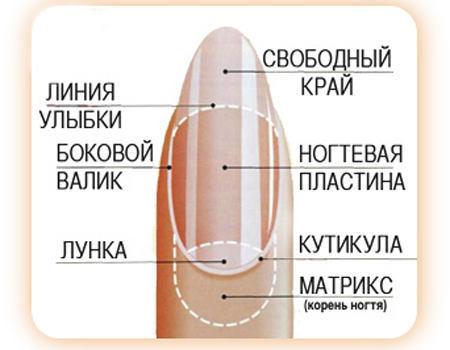 Как подобрать форму ногтей под пальцы при наращивании + фото